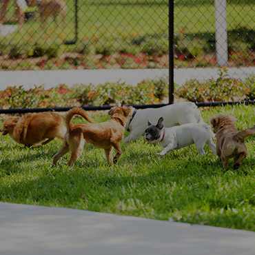 Large Dog Park at CityWalk Apartment Homes Apartments